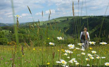 000006180-WBT – SPRL Cernix-Pierre Pauquay-Paysage de printemps