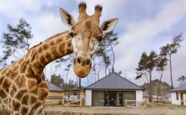 2018-04-14-beekse-bergen-safari-resort0638-bewerkt-blauwe-lucht
